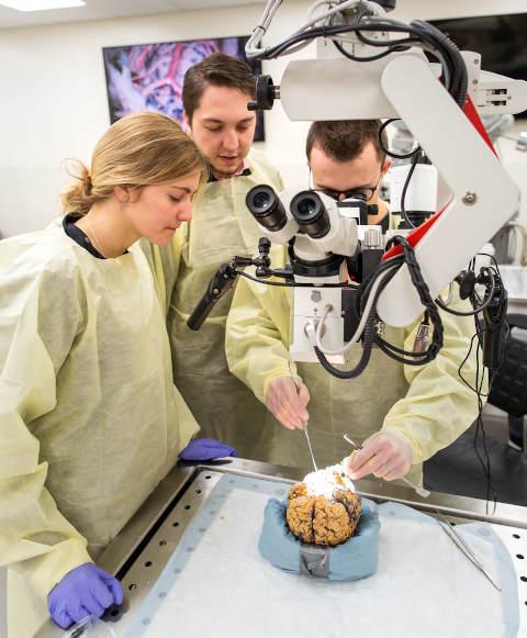 Students examine a brain